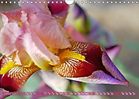 Iris - mondäne Gartenschönheit (Wandkalender 2019 DIN A4 quer) - Produktdetailbild 1