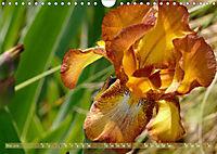 Iris - mondäne Gartenschönheit (Wandkalender 2019 DIN A4 quer) - Produktdetailbild 5