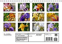 Iris - mondäne Gartenschönheit (Wandkalender 2019 DIN A4 quer) - Produktdetailbild 13
