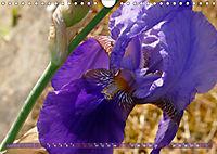 Iris - mondäne Gartenschönheit (Wandkalender 2019 DIN A4 quer) - Produktdetailbild 6