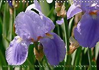 Iris - mondäne Gartenschönheit (Wandkalender 2019 DIN A4 quer) - Produktdetailbild 4