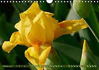 Iris - mondäne Gartenschönheit (Wandkalender 2019 DIN A4 quer) - Produktdetailbild 10