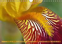 Iris - mondäne Gartenschönheit (Wandkalender 2019 DIN A4 quer) - Produktdetailbild 8