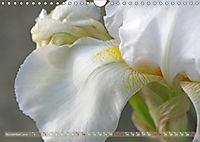 Iris - mondäne Gartenschönheit (Wandkalender 2019 DIN A4 quer) - Produktdetailbild 11
