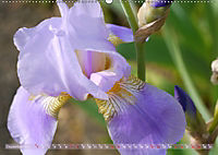 Iris - mondäne Gartenschönheit (Wandkalender 2019 DIN A2 quer) - Produktdetailbild 12