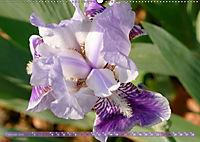 Iris - mondäne Gartenschönheit (Wandkalender 2019 DIN A2 quer) - Produktdetailbild 2