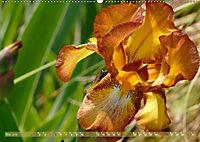 Iris - mondäne Gartenschönheit (Wandkalender 2019 DIN A2 quer) - Produktdetailbild 5