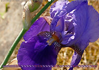 Iris - mondäne Gartenschönheit (Wandkalender 2019 DIN A2 quer) - Produktdetailbild 6