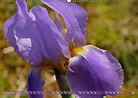 Iris - mondäne Gartenschönheit (Wandkalender 2019 DIN A2 quer) - Produktdetailbild 9
