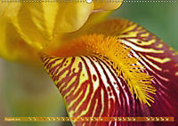 Iris - mondäne Gartenschönheit (Wandkalender 2019 DIN A2 quer) - Produktdetailbild 8