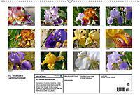 Iris - mondäne Gartenschönheit (Wandkalender 2019 DIN A2 quer) - Produktdetailbild 13