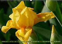 Iris - mondäne Gartenschönheit (Wandkalender 2019 DIN A2 quer) - Produktdetailbild 10