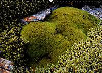 Island 2019 - Land im Werden (Wandkalender 2019 DIN A2 quer) - Produktdetailbild 6