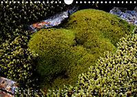 Island 2019 - Land im Werden (Wandkalender 2019 DIN A4 quer) - Produktdetailbild 6