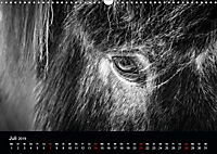Island in Schwarzweiss (Wandkalender 2019 DIN A3 quer) - Produktdetailbild 7