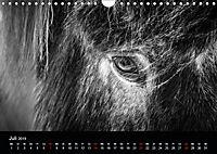 Island in Schwarzweiß (Wandkalender 2019 DIN A4 quer) - Produktdetailbild 7