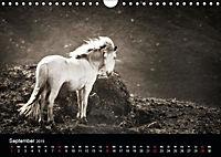 Island - Insel aus Feuer und Eis (Wandkalender 2019 DIN A4 quer) - Produktdetailbild 3