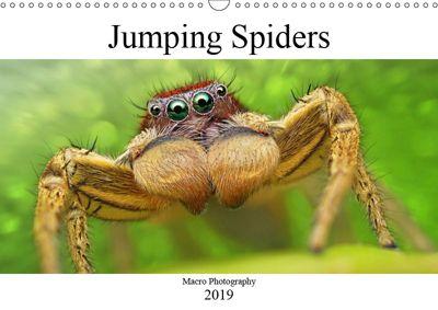 Jumping Spiders (Wall Calendar 2019 DIN A3 Landscape), Alexander Mett Photography