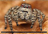 Jumping Spiders (Wall Calendar 2019 DIN A3 Landscape) - Produktdetailbild 2
