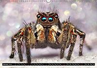 Jumping Spiders (Wall Calendar 2019 DIN A3 Landscape) - Produktdetailbild 1