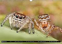 Jumping Spiders (Wall Calendar 2019 DIN A3 Landscape) - Produktdetailbild 3