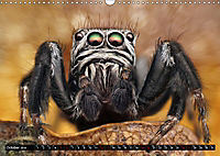 Jumping Spiders (Wall Calendar 2019 DIN A3 Landscape) - Produktdetailbild 10