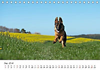 Junge Deutsche Schäferhunde (Tischkalender 2019 DIN A5 quer) - Produktdetailbild 5