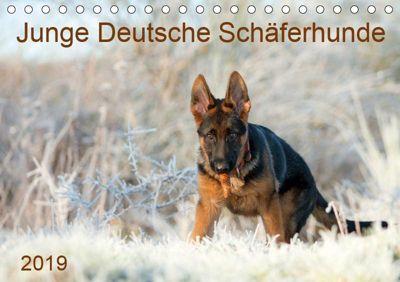 Junge Deutsche Schäferhunde (Tischkalender 2019 DIN A5 quer), Petra Schiller