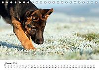 Junge Deutsche Schäferhunde (Tischkalender 2019 DIN A5 quer) - Produktdetailbild 1