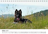 Junge Deutsche Schäferhunde (Tischkalender 2019 DIN A5 quer) - Produktdetailbild 10