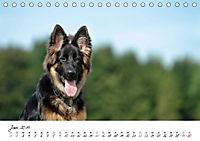 Junge Deutsche Schäferhunde (Tischkalender 2019 DIN A5 quer) - Produktdetailbild 6