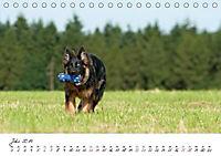 Junge Deutsche Schäferhunde (Tischkalender 2019 DIN A5 quer) - Produktdetailbild 7