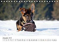 Junge Deutsche Schäferhunde (Tischkalender 2019 DIN A5 quer) - Produktdetailbild 12