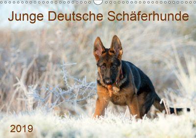 Junge Deutsche Schäferhunde (Wandkalender 2019 DIN A3 quer), Petra Schiller
