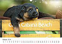 Junge Deutsche Schäferhunde (Wandkalender 2019 DIN A3 quer) - Produktdetailbild 2