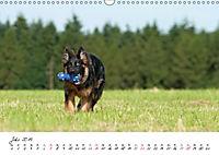 Junge Deutsche Schäferhunde (Wandkalender 2019 DIN A3 quer) - Produktdetailbild 7