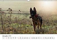 Junge Deutsche Schäferhunde (Wandkalender 2019 DIN A3 quer) - Produktdetailbild 11