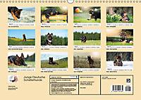Junge Deutsche Schäferhunde (Wandkalender 2019 DIN A3 quer) - Produktdetailbild 13