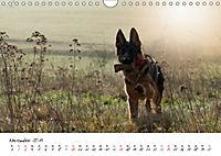 Junge Deutsche Schäferhunde (Wandkalender 2019 DIN A4 quer) - Produktdetailbild 11