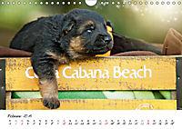 Junge Deutsche Schäferhunde (Wandkalender 2019 DIN A4 quer) - Produktdetailbild 2