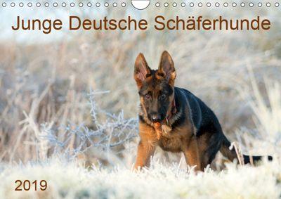 Junge Deutsche Schäferhunde (Wandkalender 2019 DIN A4 quer), Petra Schiller