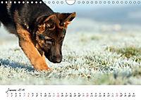 Junge Deutsche Schäferhunde (Wandkalender 2019 DIN A4 quer) - Produktdetailbild 1