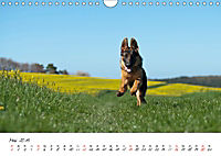 Junge Deutsche Schäferhunde (Wandkalender 2019 DIN A4 quer) - Produktdetailbild 5