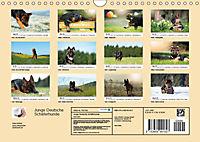 Junge Deutsche Schäferhunde (Wandkalender 2019 DIN A4 quer) - Produktdetailbild 13