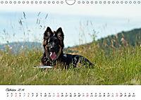 Junge Deutsche Schäferhunde (Wandkalender 2019 DIN A4 quer) - Produktdetailbild 10