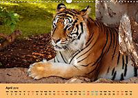 Just Bengal Tigers (Wall Calendar 2019 DIN A3 Landscape) - Produktdetailbild 4