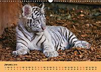 Just Bengal Tigers (Wall Calendar 2019 DIN A3 Landscape) - Produktdetailbild 1