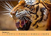 Just Bengal Tigers (Wall Calendar 2019 DIN A3 Landscape) - Produktdetailbild 2