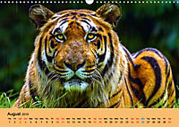 Just Bengal Tigers (Wall Calendar 2019 DIN A3 Landscape) - Produktdetailbild 8