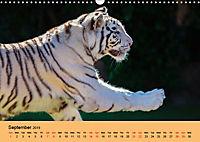 Just Bengal Tigers (Wall Calendar 2019 DIN A3 Landscape) - Produktdetailbild 9